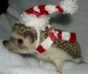 Christmas Igel